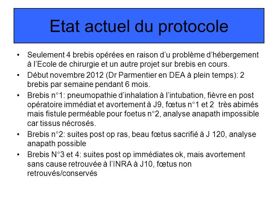 Etat actuel du protocole