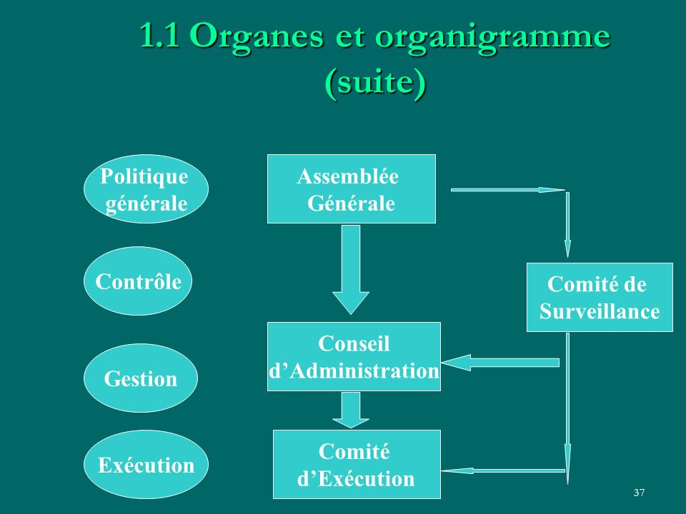 1.1 Organes et organigramme (suite)