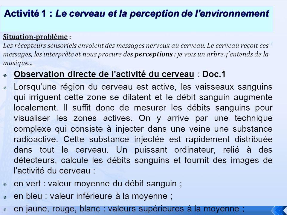 Activité 1 : Le cerveau et la perception de l environnement
