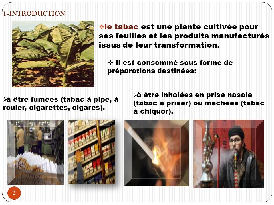1-INTRODUCTION le tabac est une plante cultivée pour ses feuilles et les produits manufacturés issus de leur transformation.