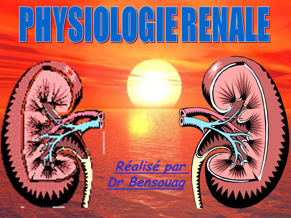 PHYSIOLOGIE RENALE Réalisé par Dr Bensouag