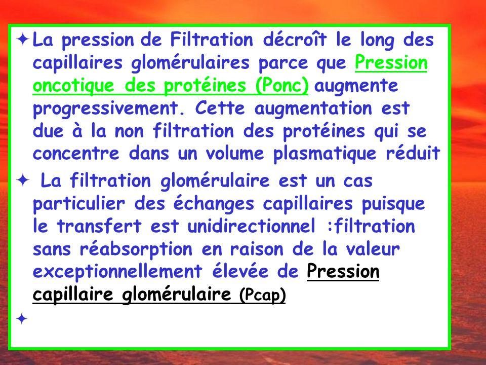 La pression de Filtration décroît le long des capillaires glomérulaires parce que Pression oncotique des protéines (Ponc) augmente progressivement. Cette augmentation est due à la non filtration des protéines qui se concentre dans un volume plasmatique réduit