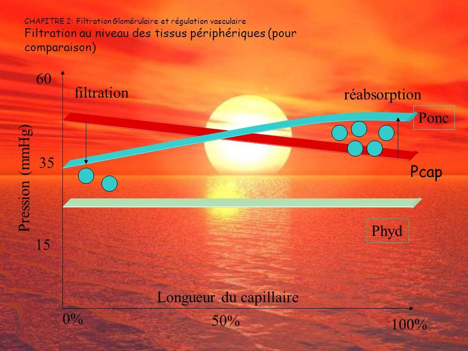 Longueur du capillaire 0% 50% 100%