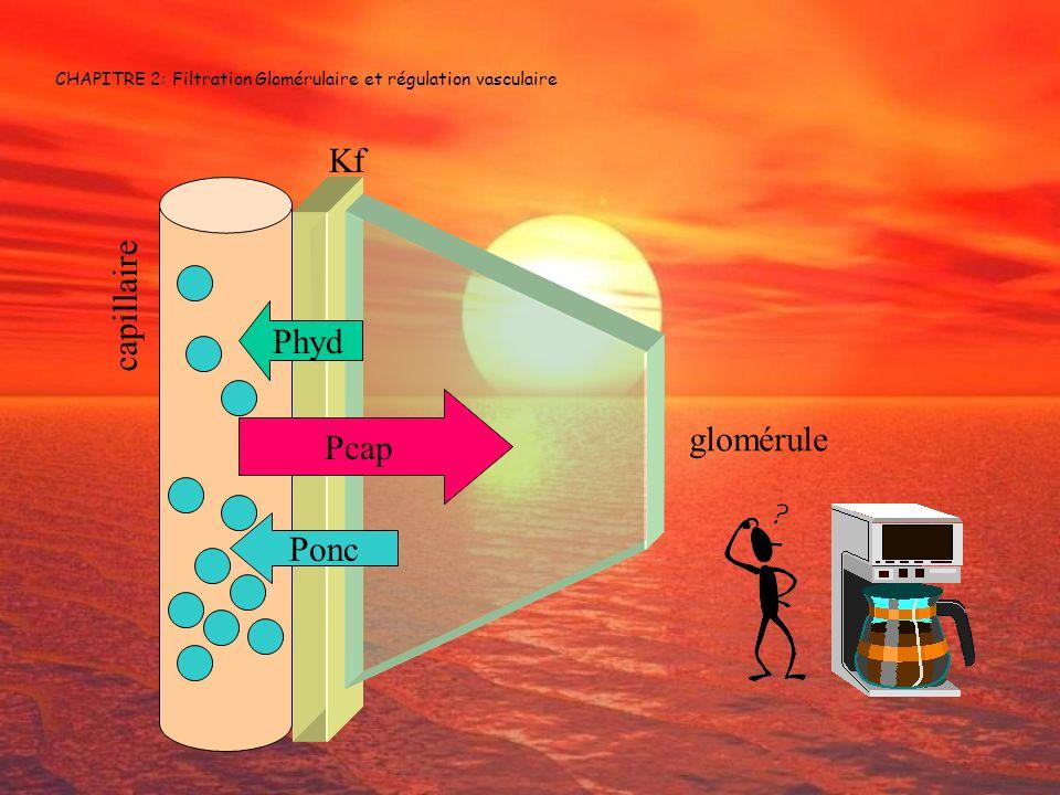 CHAPITRE 2: Filtration Glomérulaire et régulation vasculaire