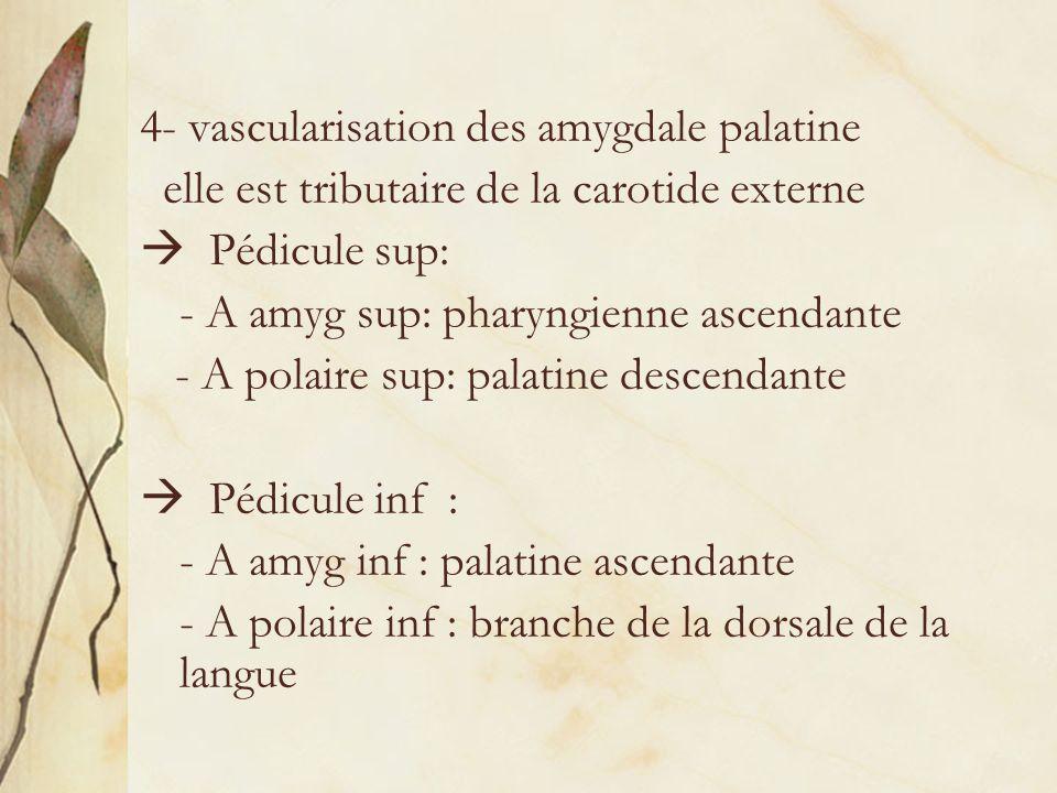 4- vascularisation des amygdale palatine