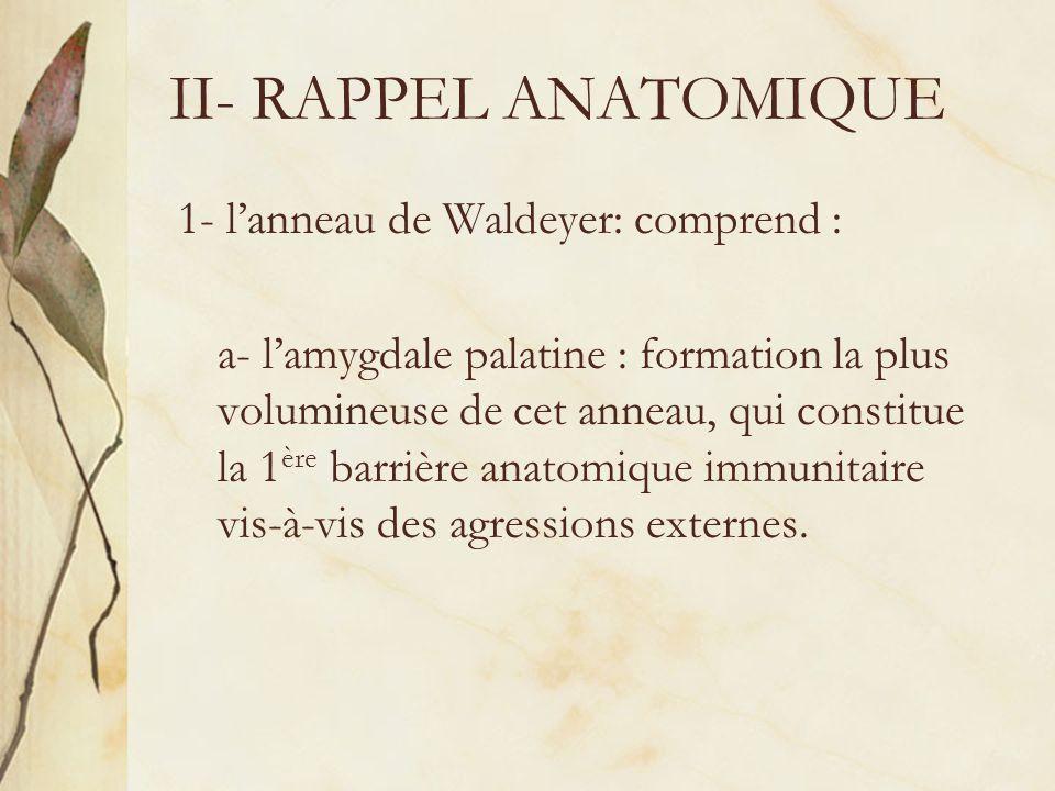 II- RAPPEL ANATOMIQUE 1- l'anneau de Waldeyer: comprend :