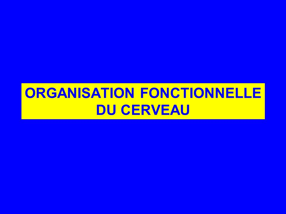 ORGANISATION FONCTIONNELLE DU CERVEAU
