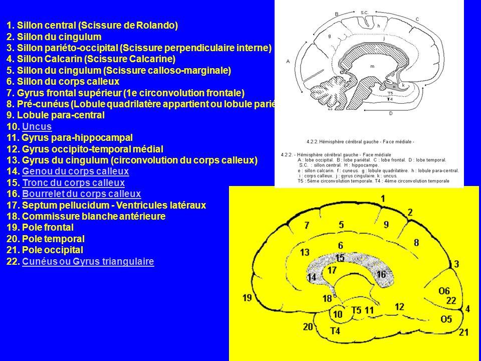 1. Sillon central (Scissure de Rolando) 2. Sillon du cingulum 3
