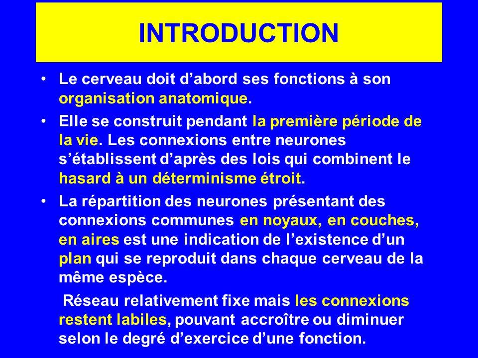 INTRODUCTION Le cerveau doit d'abord ses fonctions à son organisation anatomique.