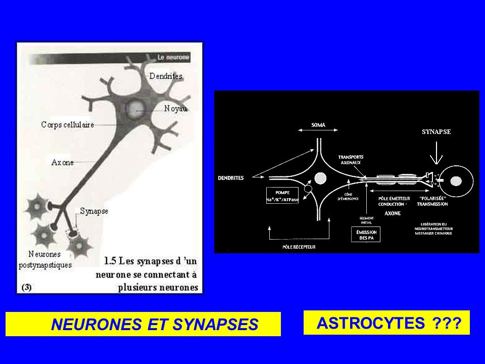 NEURONES ET SYNAPSES ASTROCYTES