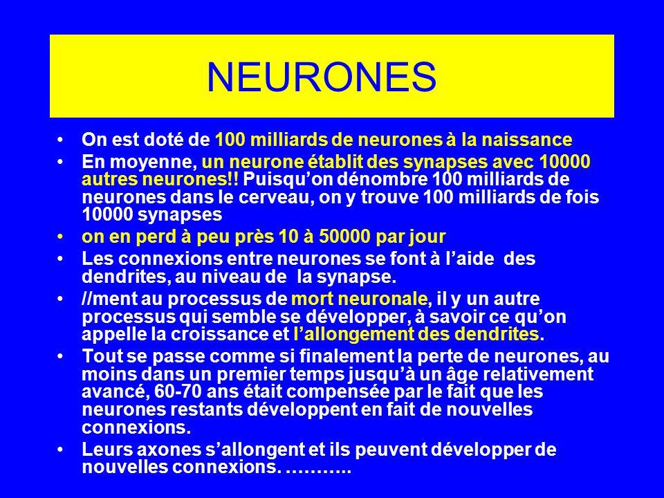 NEURONES On est doté de 100 milliards de neurones à la naissance