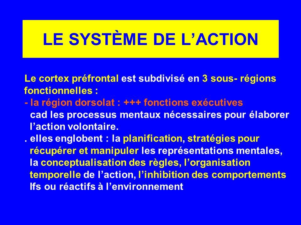 LE SYSTÈME DE L'ACTION fonctionnelles :