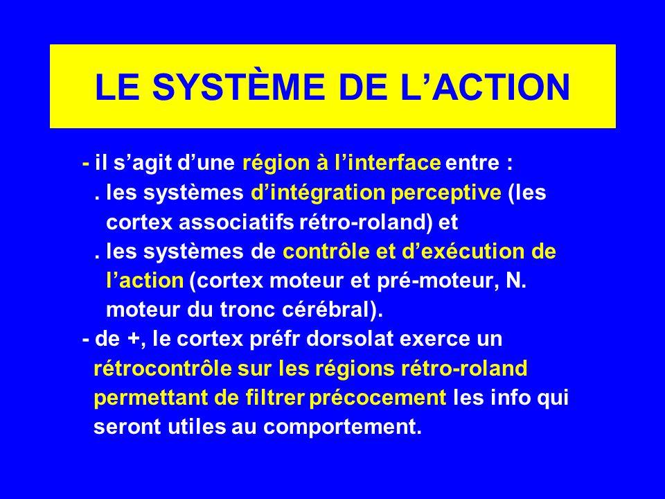 LE SYSTÈME DE L'ACTION - il s'agit d'une région à l'interface entre :