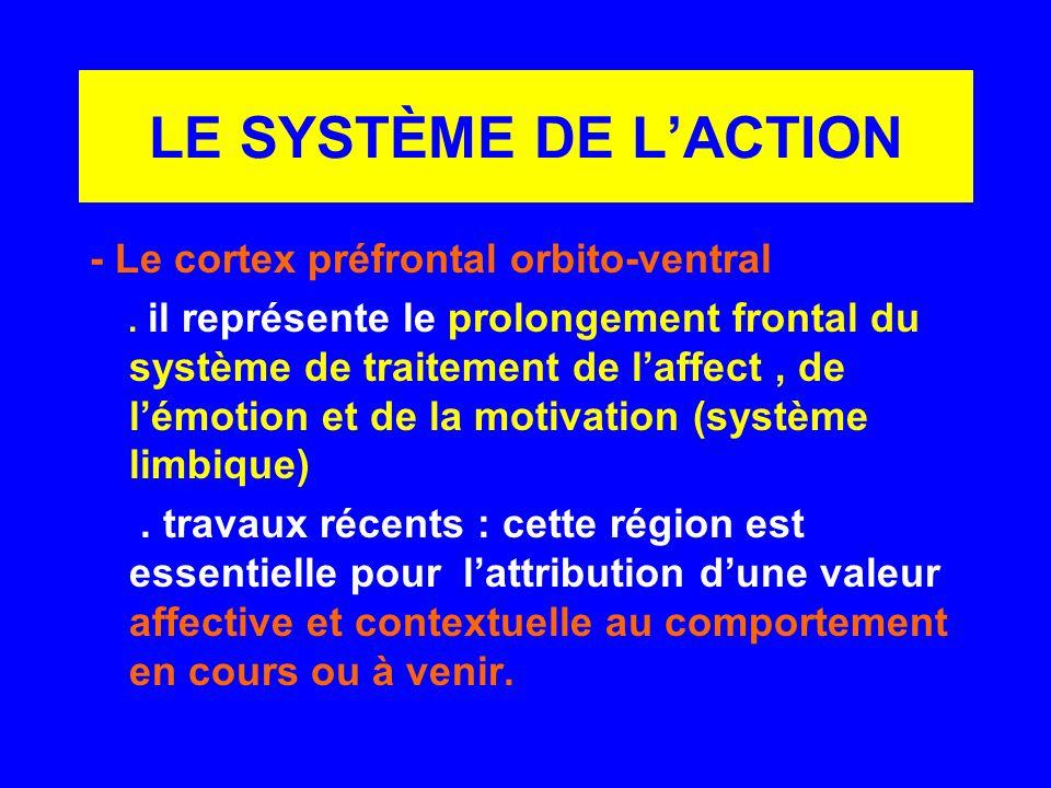 LE SYSTÈME DE L'ACTION - Le cortex préfrontal orbito-ventral