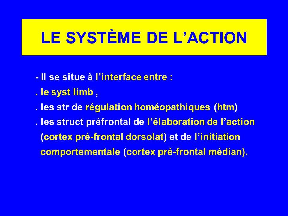 LE SYSTÈME DE L'ACTION - Il se situe à l'interface entre :