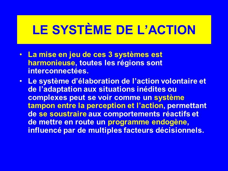 LE SYSTÈME DE L'ACTION La mise en jeu de ces 3 systèmes est harmonieuse, toutes les régions sont interconnectées.