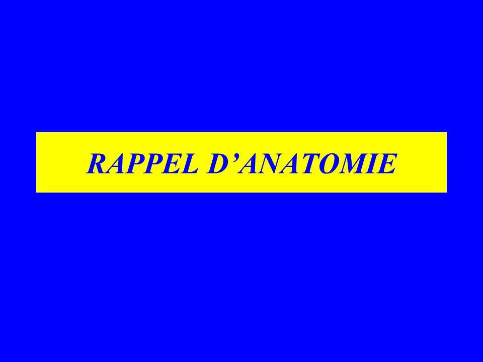 RAPPEL D'ANATOMIE