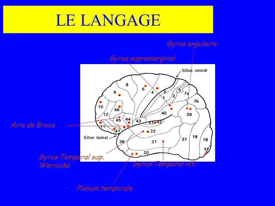 LE LANGAGE Gyrus angulaire Gyrus supramarginal Aire de Broca