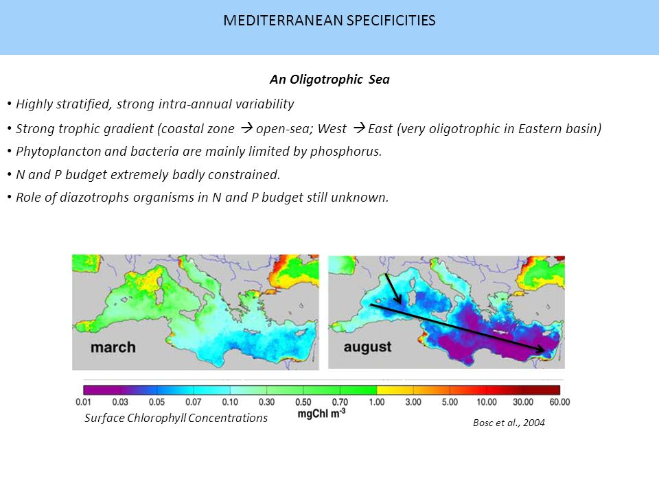 MEDITERRANEAN SPECIFICITIES