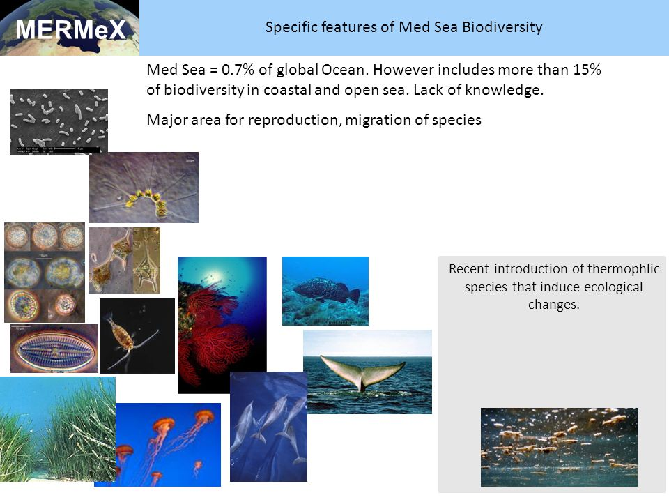 Specific features of Med Sea Biodiversity