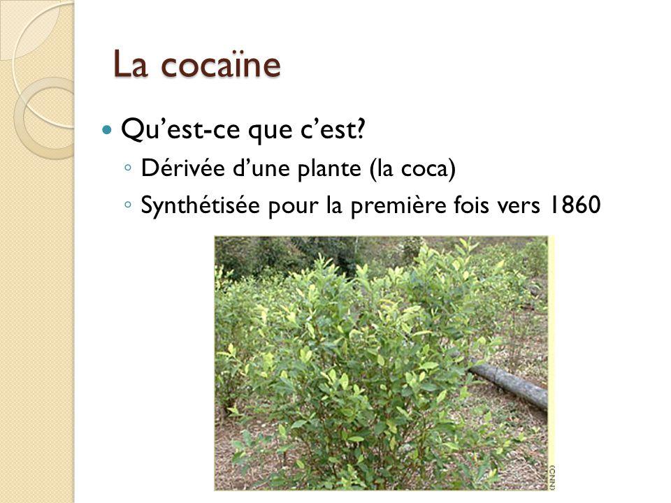 La cocaïne Qu'est-ce que c'est Dérivée d'une plante (la coca)