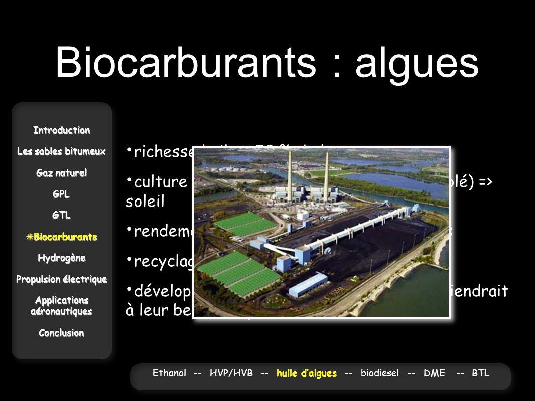 Biocarburants : algues