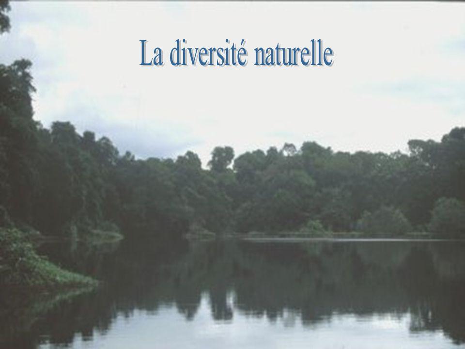 La diversité naturelle