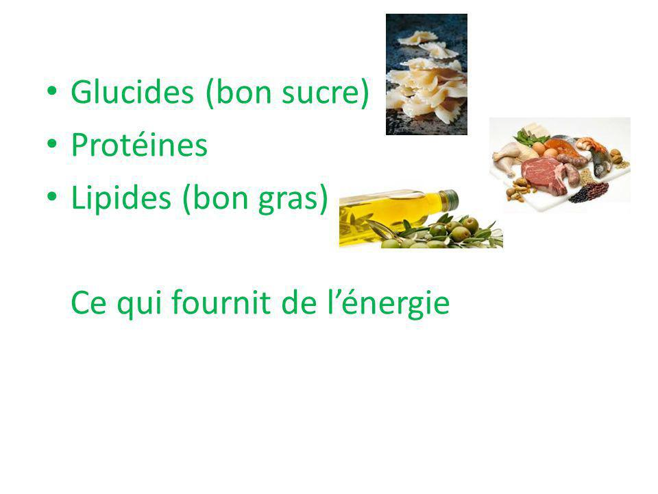 Glucides (bon sucre) Protéines Lipides (bon gras) Ce qui fournit de l'énergie