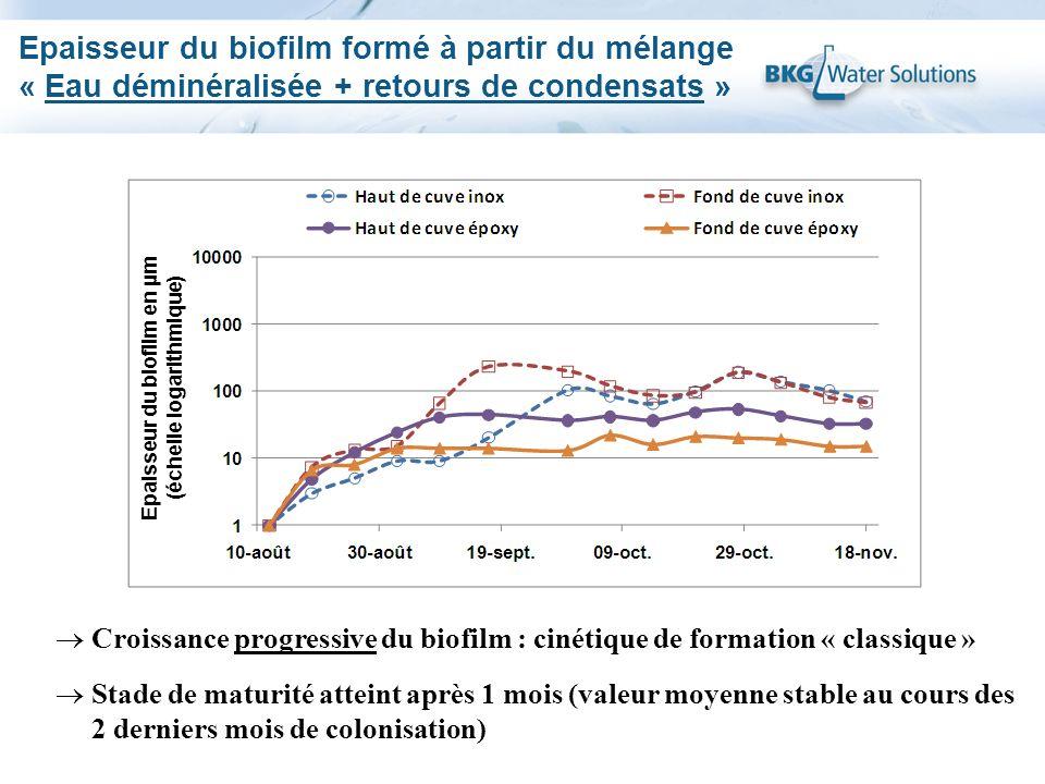 Epaisseur du biofilm en µm (échelle logarithmique)