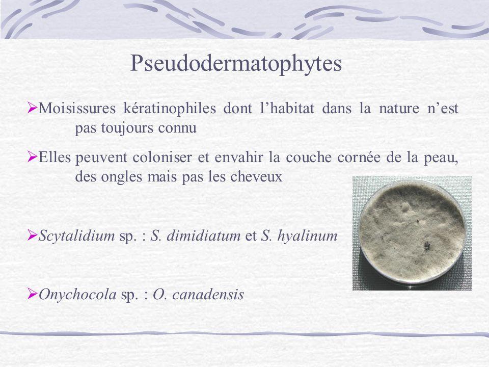 Pseudodermatophytes Moisissures kératinophiles dont l'habitat dans la nature n'est pas toujours connu.