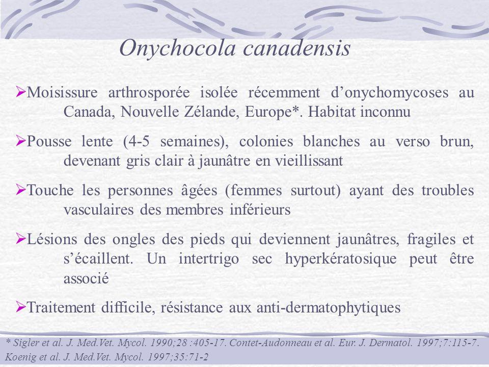 Onychocola canadensis
