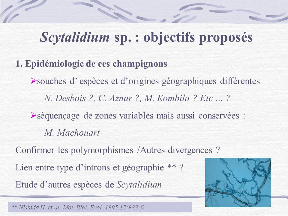 Scytalidium sp. : objectifs proposés