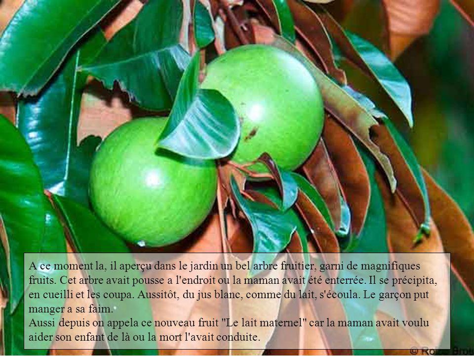 A ce moment la, il aperçu dans le jardin un bel arbre fruitier, garni de magnifiques fruits.