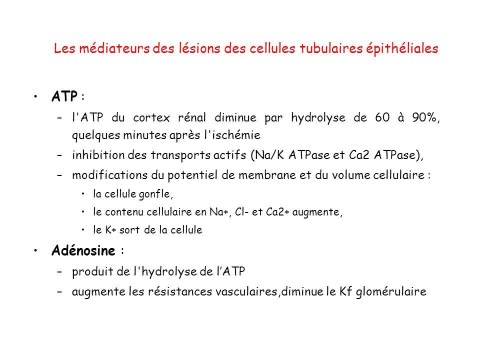 Les médiateurs des lésions des cellules tubulaires épithéliales