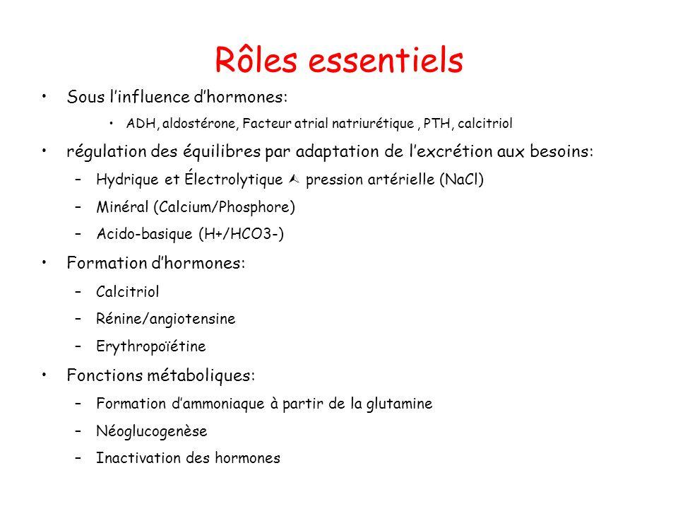Rôles essentiels Sous l'influence d'hormones: