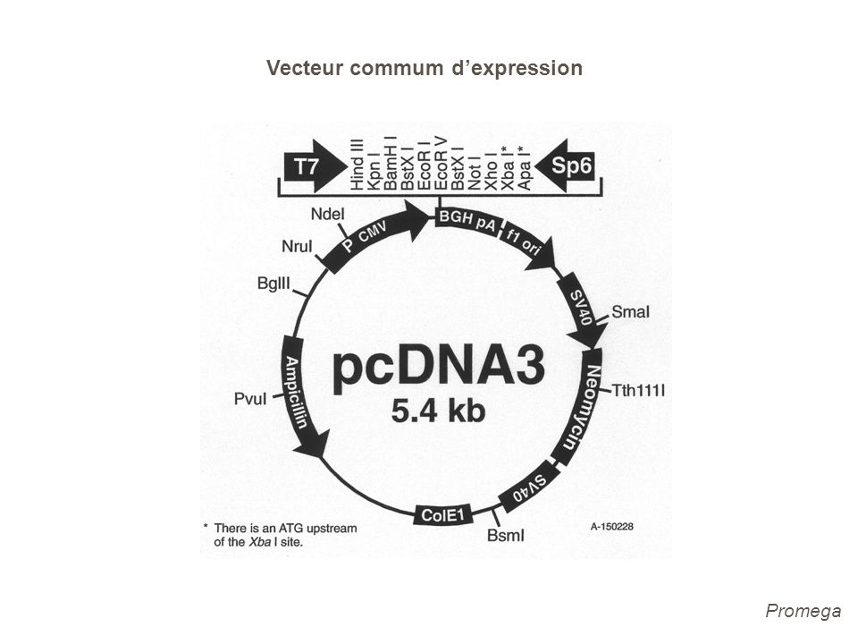 Vecteur commum d'expression