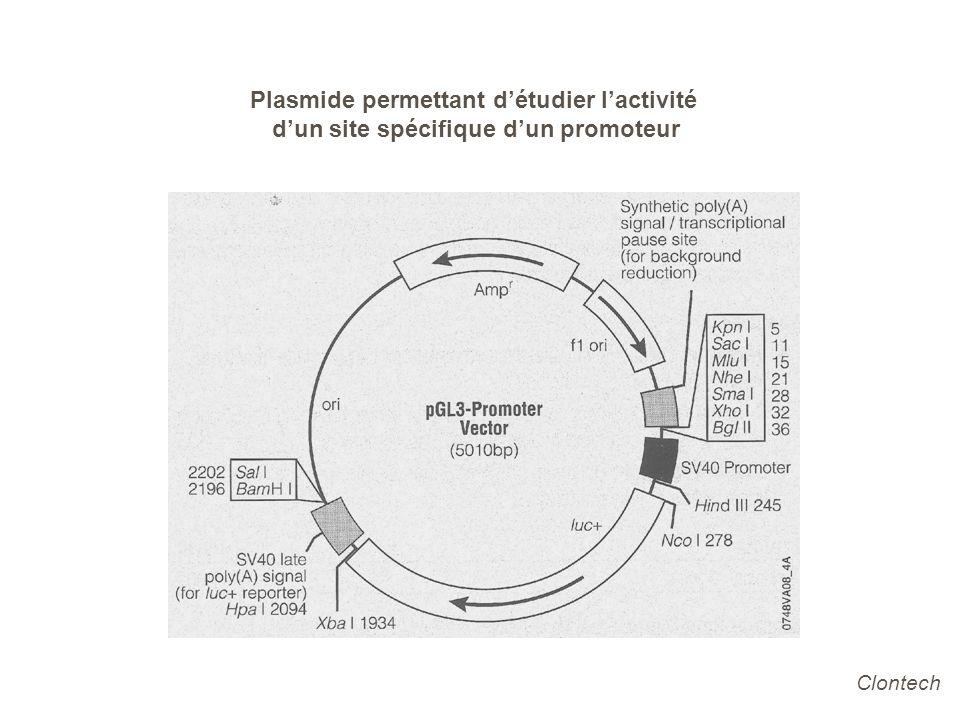 Plasmide permettant d'étudier l'activité