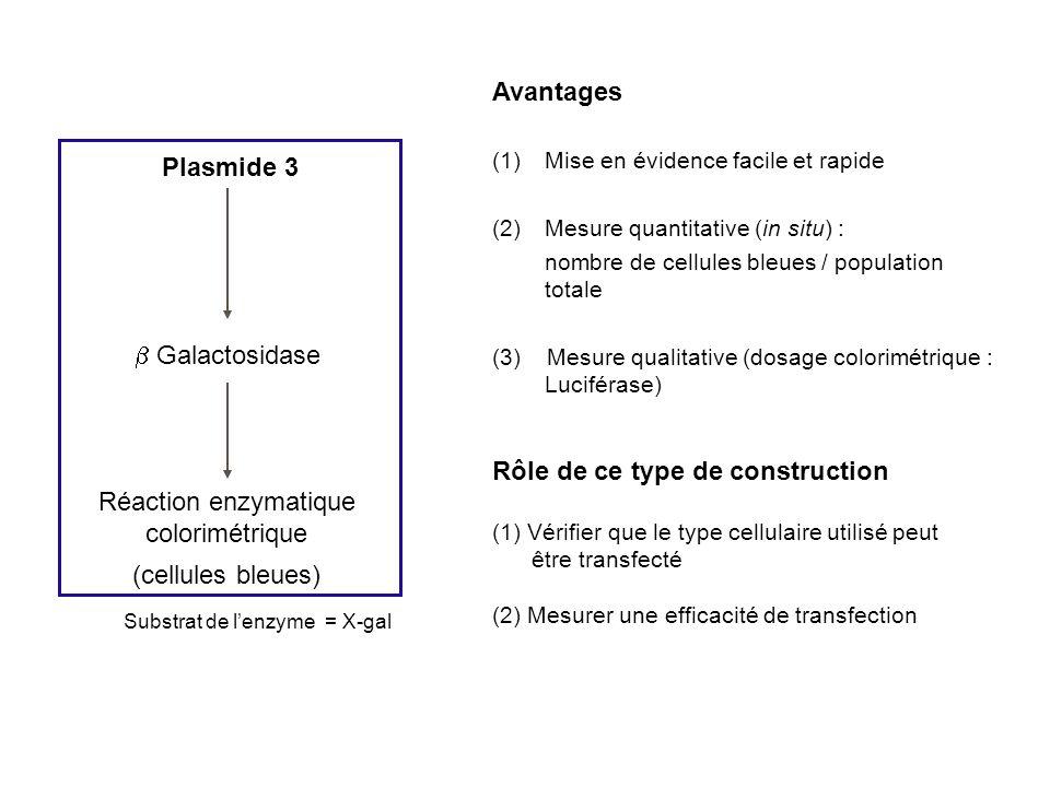 Rôle de ce type de construction Plasmide 3
