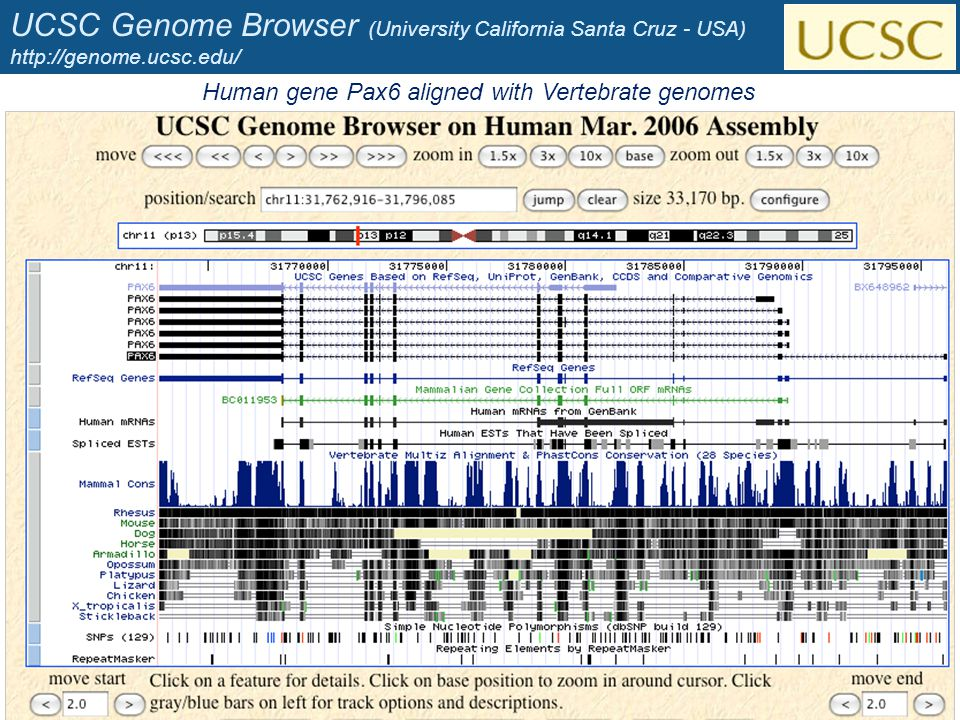 UCSC Genome Browser (University California Santa Cruz - USA) http://genome.ucsc.edu/