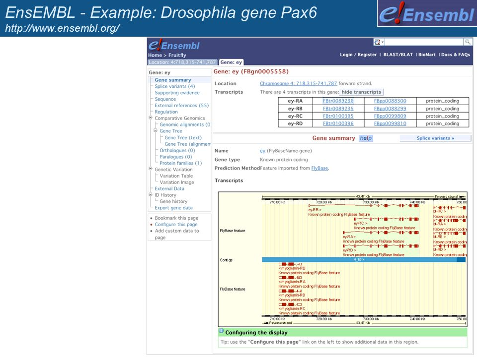 EnsEMBL - Example: Drosophila gene Pax6 http://www.ensembl.org/