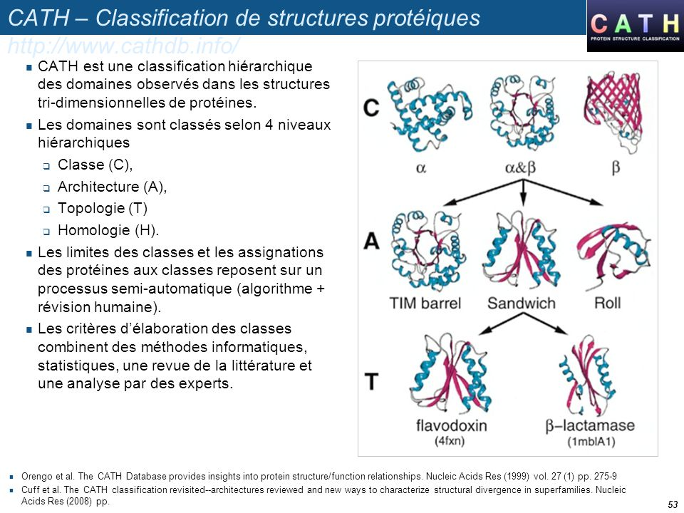 CATH – Classification de structures protéiques http://www.cathdb.info/