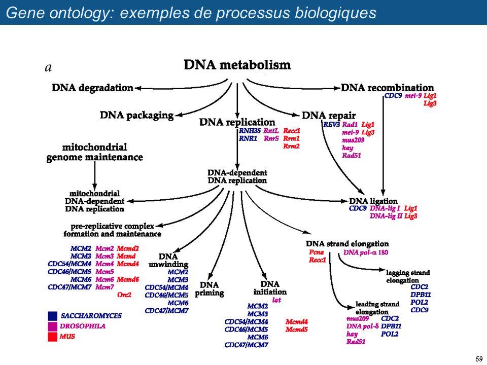 Gene ontology: exemples de processus biologiques