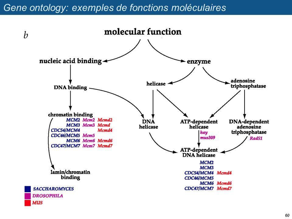 Gene ontology: exemples de fonctions moléculaires