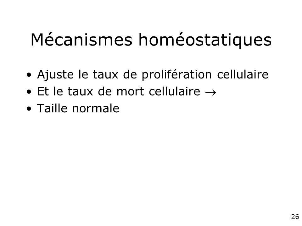 Mécanismes homéostatiques