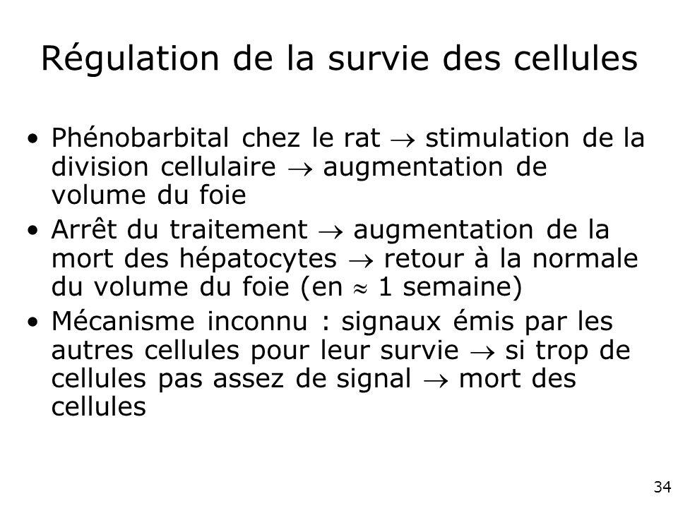 Régulation de la survie des cellules