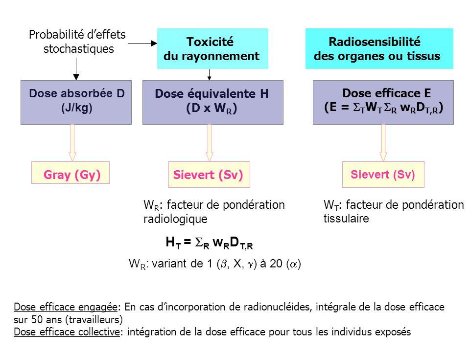 HT = R wRDT,R Probabilité d'effets stochastiques Toxicité