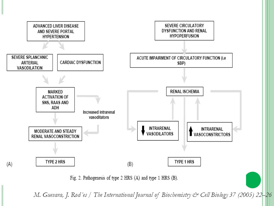 M. Guevara, J. Rod´es / The International Journal of Biochemistry & Cell Biology 37 (2005) 22–26