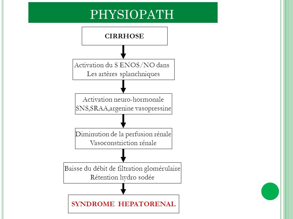 PHYSIOPATH CIRRHOSE Activation du S ENOS/NO dans