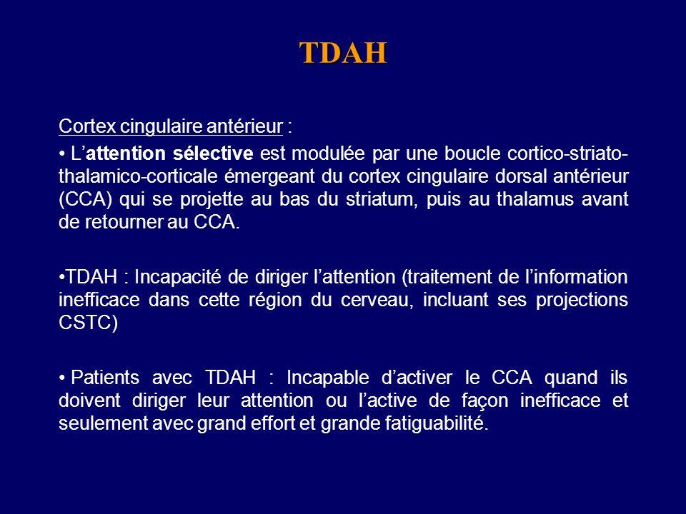 TDAH Cortex cingulaire antérieur :