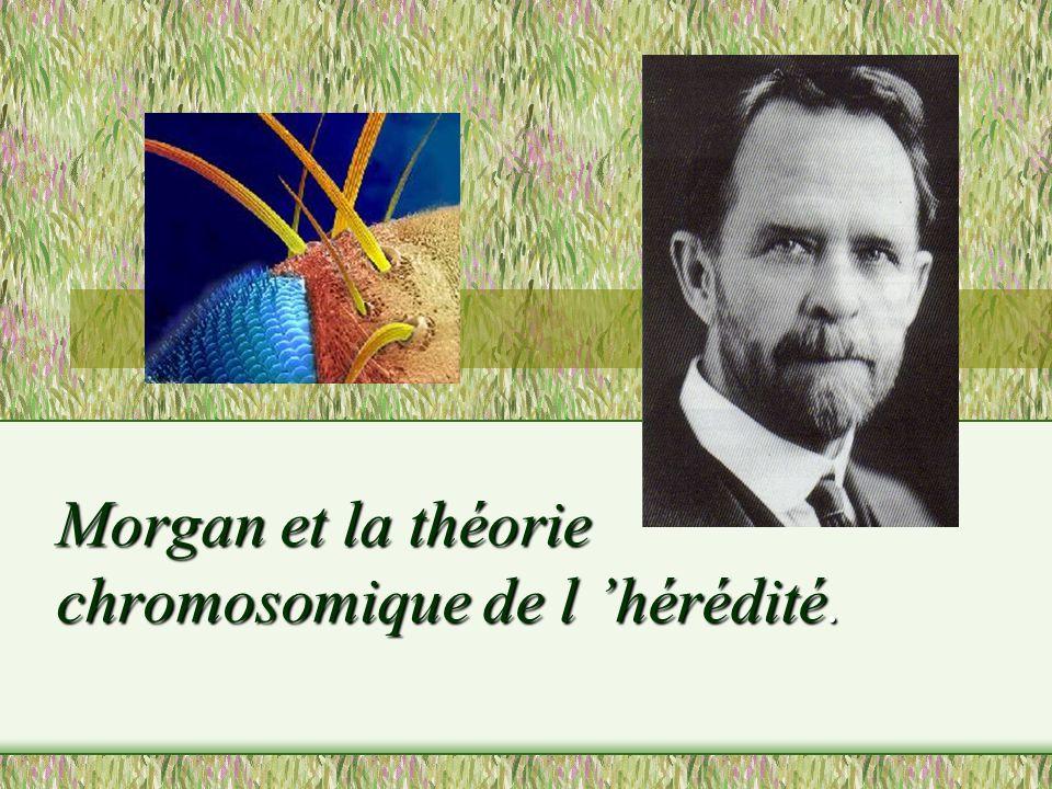 Morgan et la théorie chromosomique de l 'hérédité.